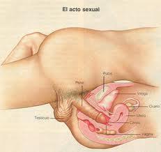 Fotos de la vagina y el pene
